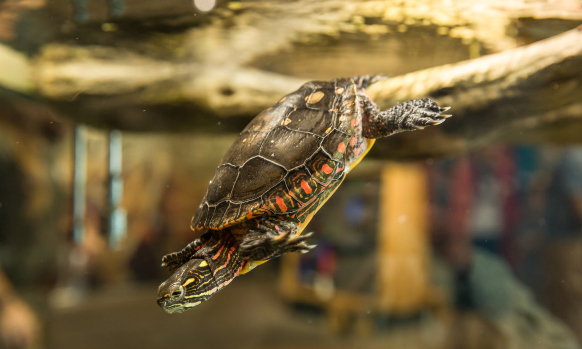 Check out turtles and other New England based animals