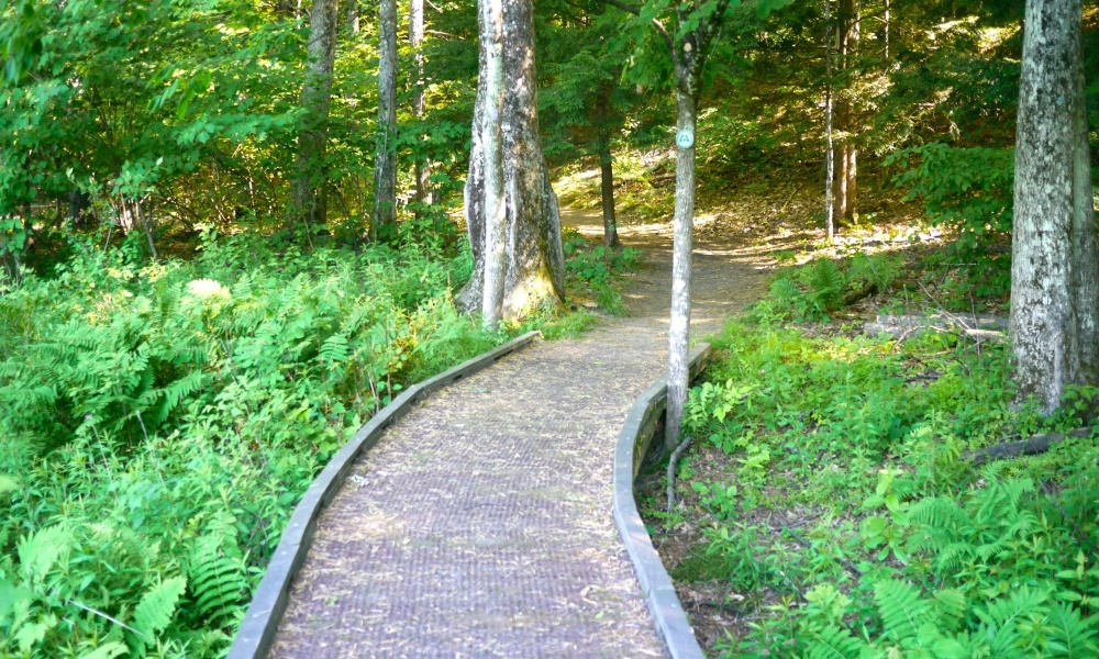 Start in David Goudy Science Park and make your way through this scenic trail.