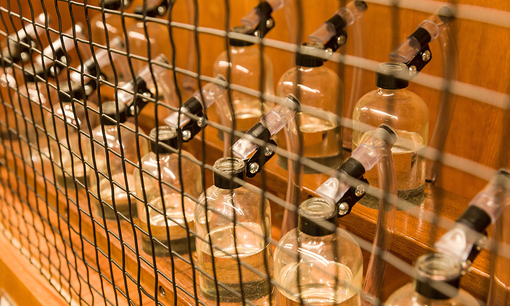 Play with a whimsical <i>Bottle Organ</i>.