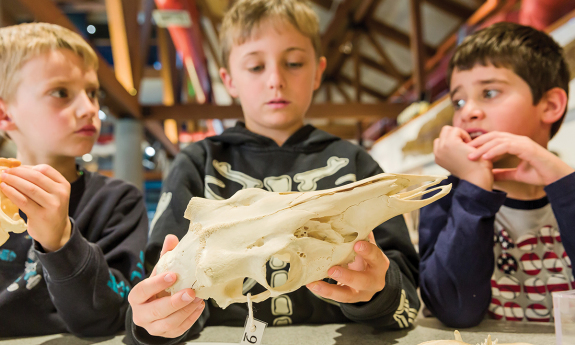Learn about fossils and more at the Science Discovery Lab