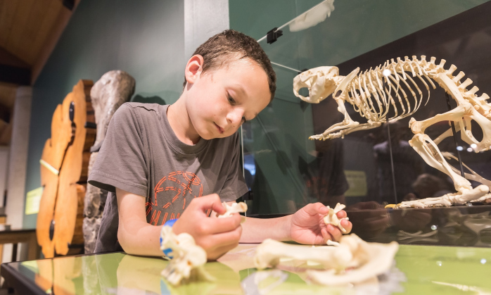 Spend a week exploring the science of skeletons with Montshire at Home. Check out the videos and downloads of activities that you can easily do at home!