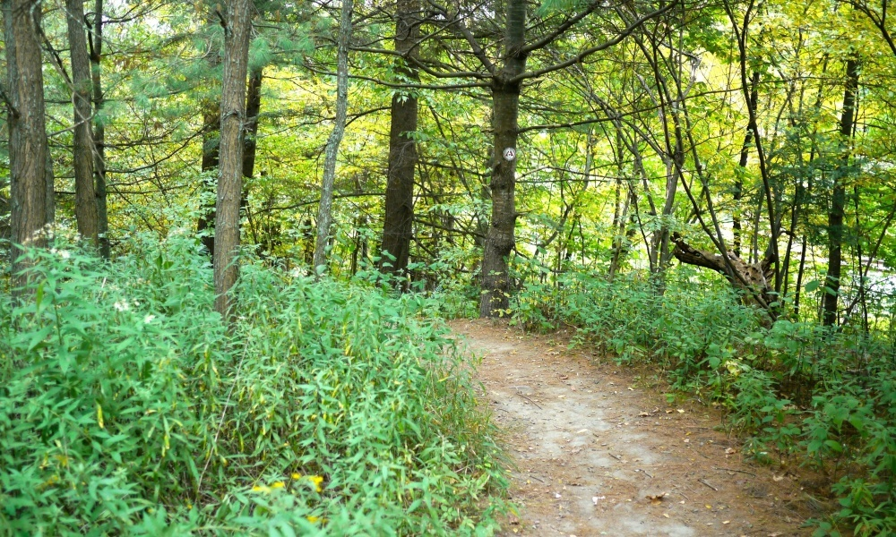 This trail offers variety as you pass along different terrains