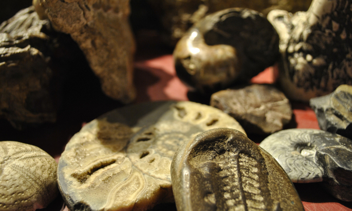 Observe the Montshire's fossil collection through a virtual guided tour with a Montshire educator.