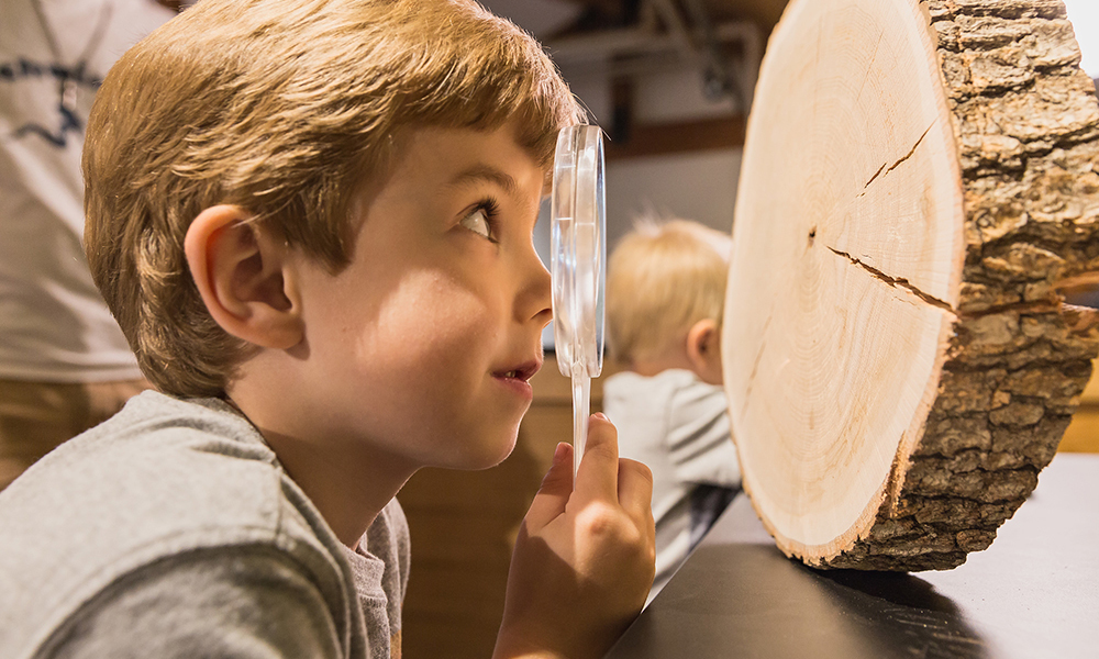 Take a close look at tree rings.